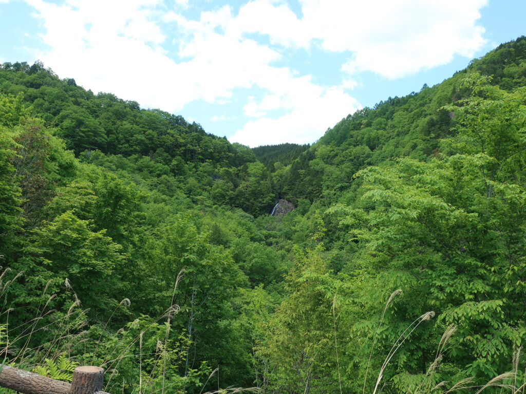 滝見展望台から大倉滝